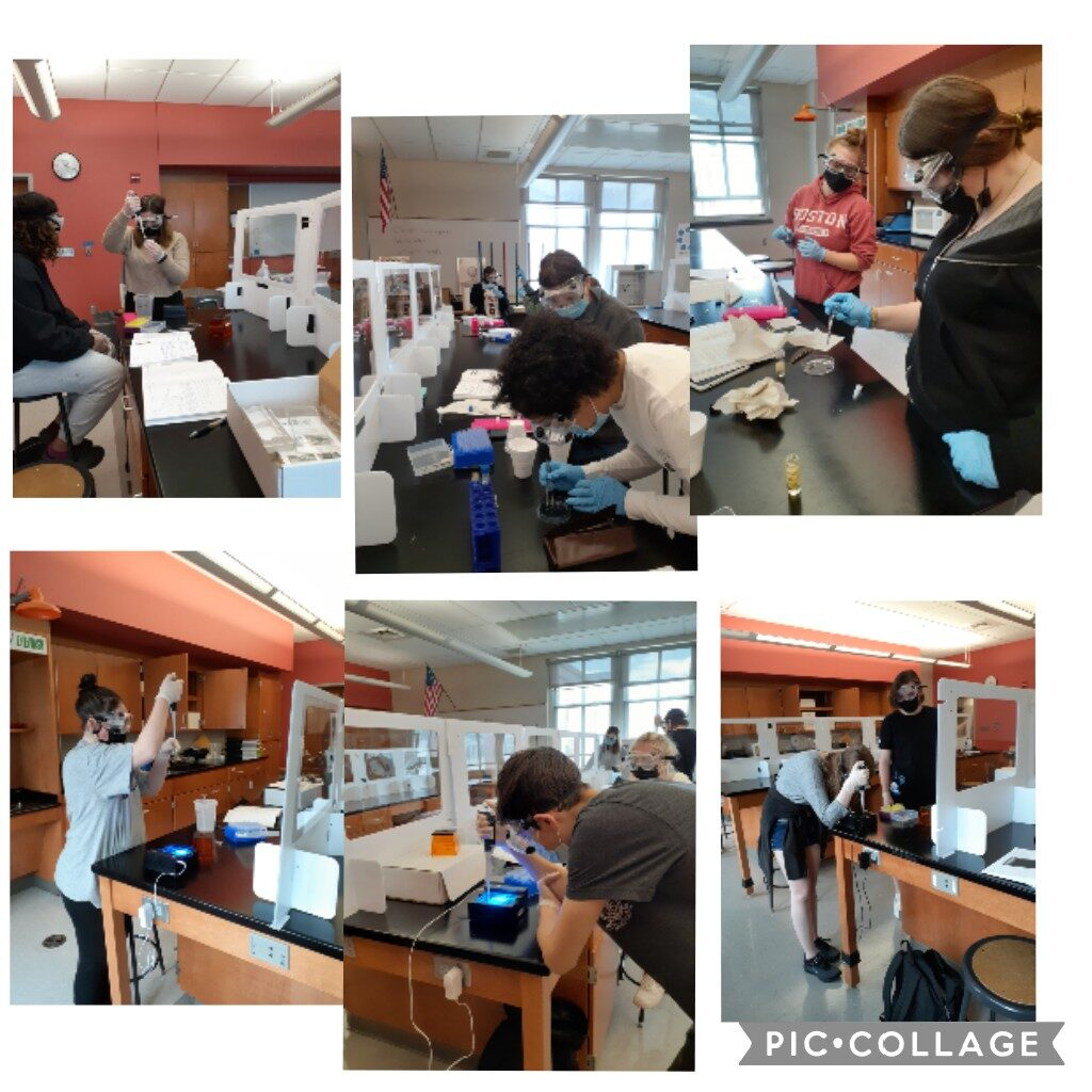 Collage of students working on molecular biology (gels, PCR) in a classroom.