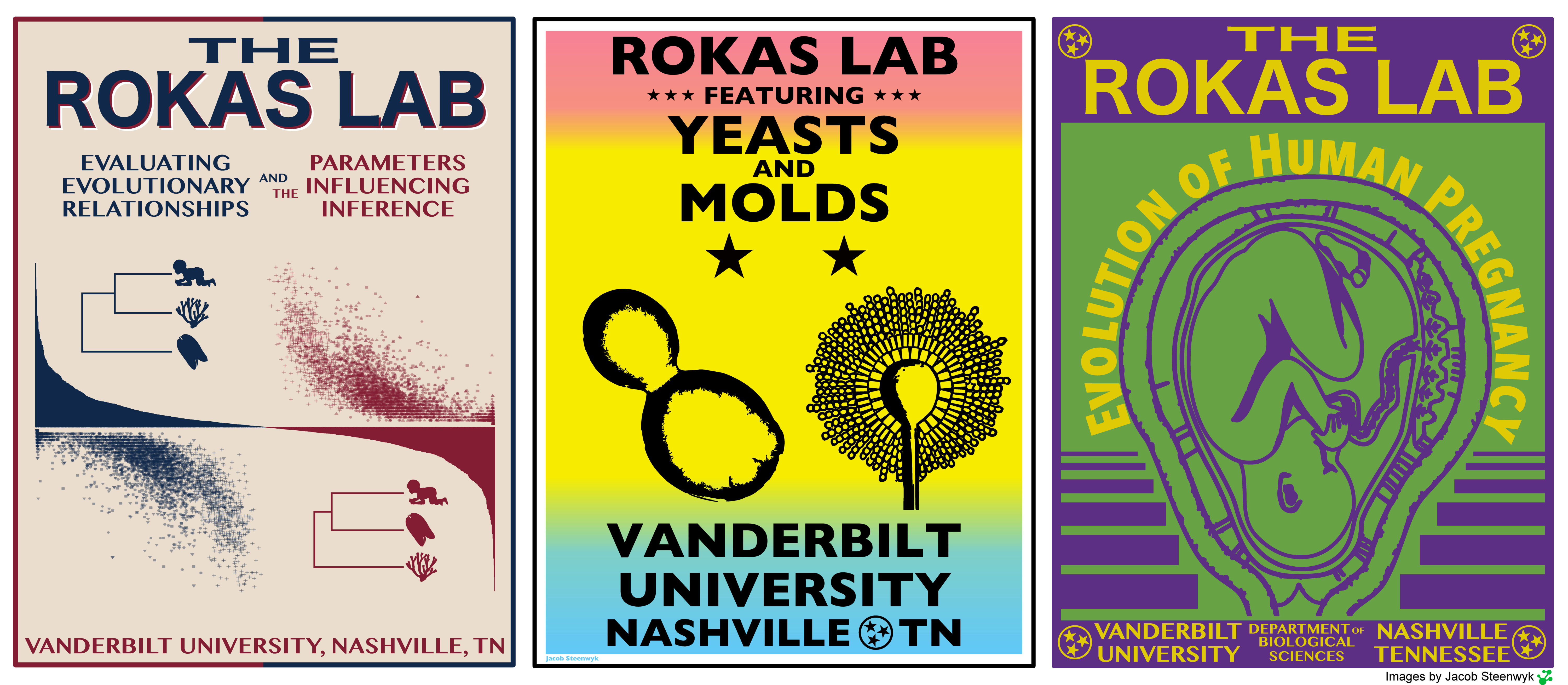 "A collage of posters created for the Rokas Lab. Poster 1: tan background, blue and red diagrams showing a bracket connecting an infant, coral, and jellyfish and text saying ""The Rokas Lab: Evaluating Evolutionary Relationships and the Parameters Influencing Inference, Vanderbilt University, Nashville, TN""; Poster 2: a pink, yellow, and blue background with black graphics of yeasts and molds and text saying ""Rokas Lab: Featuring Yeast and Molds, Vanderbilt University, Nashville, TN""; Poster 3: a green and purple background with a graphic of a fetus inside a uterus and text saying ""The Rokas Lab: Evolution of Human Pregnancy, Vanderbilt University Department of Biological Sciences, Nashville, Tennessee."""