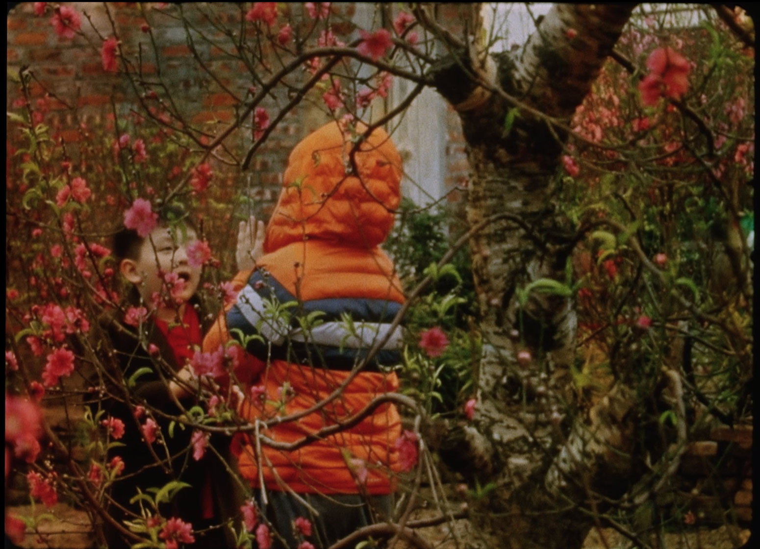 two small children, one facing the camera and wearing a red shirt and dark jacket and one facing away from the camera and wearing an orange hooded coat, stand in a grove of read-leafed trees