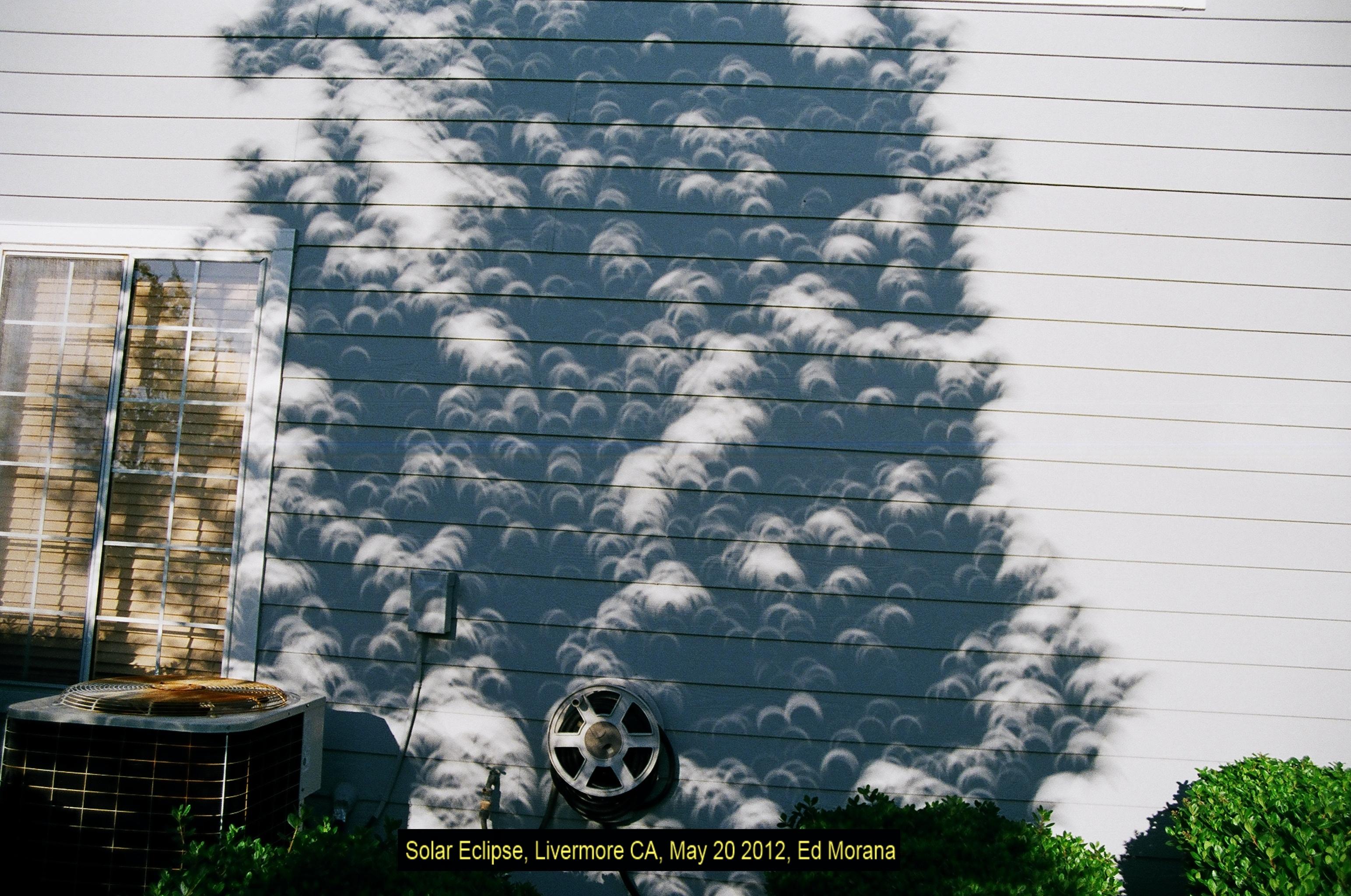 eclipseTreeClose